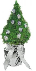 Geschenke-Bäumchen 35-45 cm als Werbeartikel