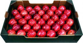 Präsentset 39 Weihnachtsäpfel und Korb als Werbeartikel