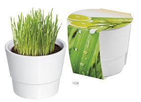 Pflanztopf Zitronengras als Werbeartikel