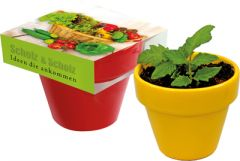 Naschgemüse Colour Mini-Gurke als Werbeartikel